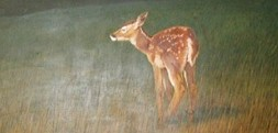 cropped-occpehr-mural.jpg
